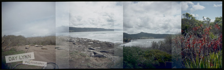 holga001-(1)-overlapping-elephant-seals_watermark